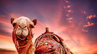 10 millió dolláros tevekórház nyílt Dubajban