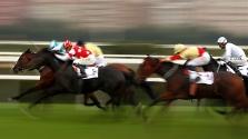 Genetikailag megtervezett lovak nyerhetik a versenyeket a jövőben