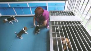 Emberek millióinak életét mentheti meg a Kínában klónozott kutya