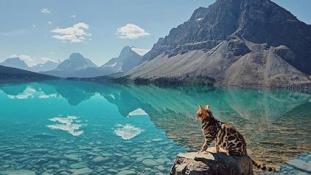 Utazó bengáli macska az Instagram új sztárja