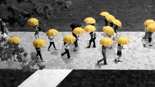 Ingyenes esernyőmegosztó program indul Kanadában