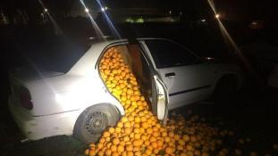 Gyümölcslopás felsőfokon: 4 tonna narancsot loptak el Spanyolországban