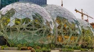 Az Amazon esőerdőt épített a dolgozóinak