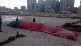 12 méteres bálnát találtak Alexandriában
