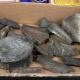 5 millió éves mamutcsontokat hagyott valaki egy adományboltban