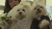 EsküvÅ' kutyamódra – videó