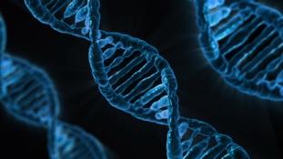 DNS tesztből megjósolható az intelligencia – állítja egy új tanulmány