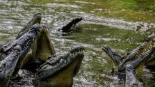 Namíbiában kárpótlást kapnak a krokodilok és vízilovak áldozatai