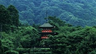 Erdőterápiával veszik fel a harcot a stresszel Japánban