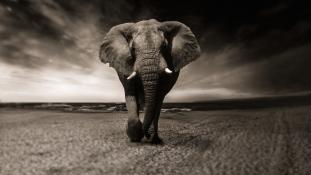 Egy cirkuszi elefánt halála – videó