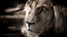 Szögre akaszthatja az ostort az utolsó oroszlánszelídítő Nagy-Britanniában