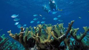 Hawaii betilt bizonyos napvédő termékeket, hogy megvédje a korallzátonyokat