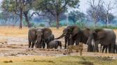 Fegyveres nők védelmezik az elefántokat Zimbabwében – videó