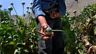 Harc az ópium ellen – fiatal nők videojátékot készítettek Afganisztánban