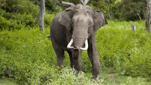 Elefántok és menekültek konfliktusa – videó