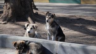 Kóbor kutyák szigete – videó
