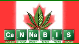 Kanada a marihuána paradicsoma lesz?