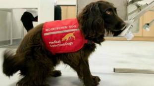 Kutyák szagolhatják ki a rákot az angol kórházakban