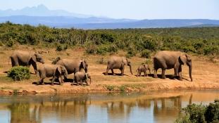 Sokkoló statisztikák az Elefántok Világnapján