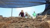 Izrael: boroskancsók egy 1800 éves fazekasműhelyből