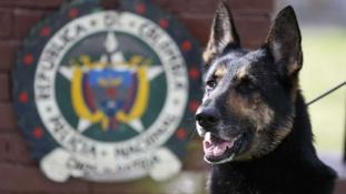 Vérdíj egy kábítószert kiszimatoló kutya fejére – videó