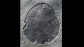Ez a félmilliárd évvel ezelőtti lény a világ legősibb állata