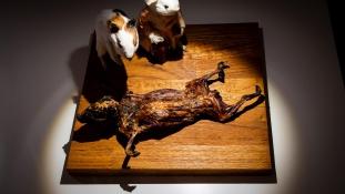 Gyomorforgató ételeknek nyitnak múzeumot Malmőben