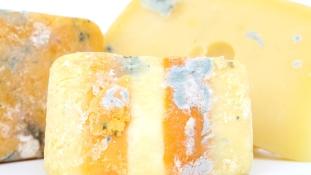 Több, mint 7000 éves lehet a világ legrégebbi sajtja