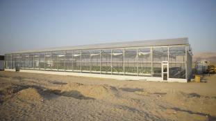 Mezőgazdaság a sivatagban: így termesztenek Jordániában