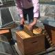 Párizsban virágzik a városi méhészkedés