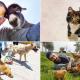 Állatoknak készít kerekesszékeket egy fiatal török férfi