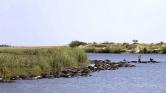 Oroszlánok elől menekültek – vízbe fulladt 400 kafferbivaly