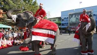 Elefánt Mikulás Thaiföldön – videó