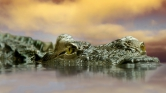 A rekordeső kígyókat és krokodilokat mosott az utcára Ausztráliában