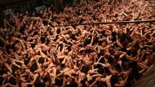Ilyen az, amikor ágyékkötős japán férfiak kergetnek két botot – videó