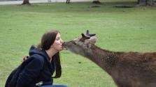 Külföldi turistákra hajtanak Japán vad szarvasai