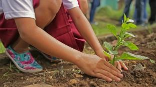 Minden gyerek után egy fa: Brüsszel így ültetné tele Afrikát