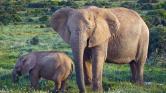 15 év börtön az elefántcsont-királynőnek