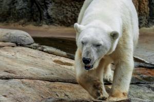 bear-3485313_960_720