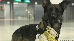 Háromnegyed millió eurót szimatolt ki Luke a reptéren