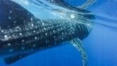 Bekapta, majd kiköpte a cethal – videó