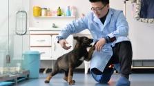 Kína első klónozott kutyája rendőri szolgálatra jelentkezett
