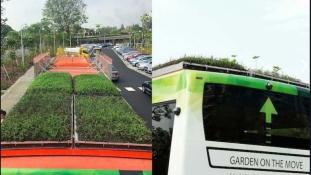 Szingapúrban a buszok tetejét is beültették növényekkel