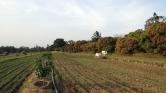 Napenergiával öntözik a földeket Indiában