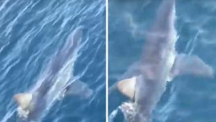 Cápát videózott le egy német turista Makarskánál