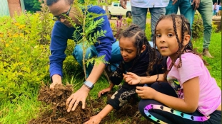 350 millió fát ültettek el 12 óra alatt Etiópiában