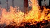 Ijesztő gyorsan égnek el az Amazonas esőerdői