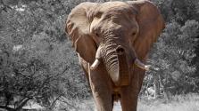 55 elefánt éhezett halálra két hónap alatt Zimbabwe legnagyobb nemzeti parkjában