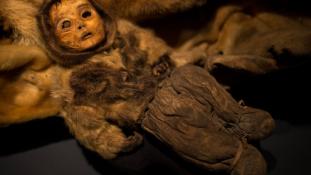 Kiállítják az 500 éves grönlandi múmiákat
