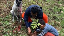 Világrekord – 350 millió fát ültettek 12 óra alatt Etiópiában
